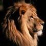 Avatar de Lionheart69